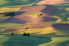 The process masters the meek rhythm. (TheRealMichaelMoore) Tags: 2016 colfax palouse steptoe steptoebutte washington farm fields hills landscape sunrise wheat unitedstates