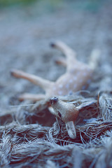 fatal (  Pounkie  ) Tags: fatal faon petitbichon bambi deer daim bichon fawn jouet toy animal heckleoujeckle pige corde