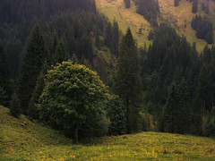 The Outsider (Netsrak) Tags: kleinwalsertal riezlern hirschegg mittelberg austria sterreich mountains mountain berg berge gebirge meadow wiese tree trees baum bume wald woods forest forst green grn