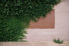 Design District (BurlapZack) Tags: pentaxk1 pentaxhddfa28105mmf3556eddcwr vscofilm pack01 dallastx designdistrict vine brickwall square balance minimal minimalist sidewalk wall brick concrete ivy banal urban summer summertime wideangle green greenery foliage flora