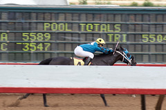 Coming down the stretch (DanJBailey) Tags: outdoors jockey horseracing racetrack newmexico nm ruidoso downs horse horses thoroughbred race racing canon 60d