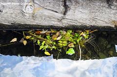 tronco, agua y hojas (tonomf) Tags: tronco agua water ro river hojas reflejos nubes nikon nikond5100