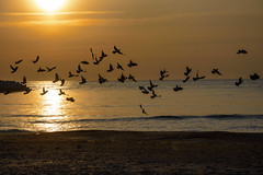 Risisng... (Francizc Chachula) Tags: nikon d7200 18105mm nikkor beach blacksea black sea nature natural birds water sunrise yellow deeptoffied reflexion constanta romania april 2016