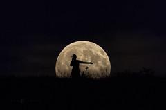 The Moon Dance. (Eden Bhatta) Tags: moon moonrise moonscape fullmoon augustfullmoon sturgeon southdakota thetaintedtripod canon100400mmisii canon70d perspectivedistortion silhouette