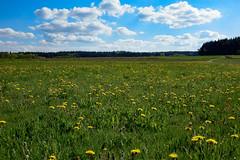 DSC05381 (herwig.gnadenberger) Tags: landschaft landscape lwenzahn waldviertel wolken wald wiese