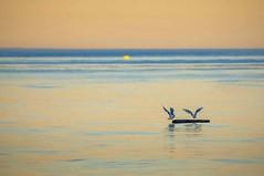 Seagull Sunrise (ScarletBlack) Tags: qualicum qualicumfirstnationscampground seagulls sunrise orangesunrise gulls
