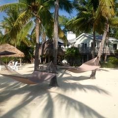 Just Kicking Back (Neal D) Tags: beach palm coconutpalminn tavernier florida
