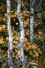 Autumn Colors, Grand Teton National Park (al-ICE g) Tags: grandtetonnationalpark jennylake wy