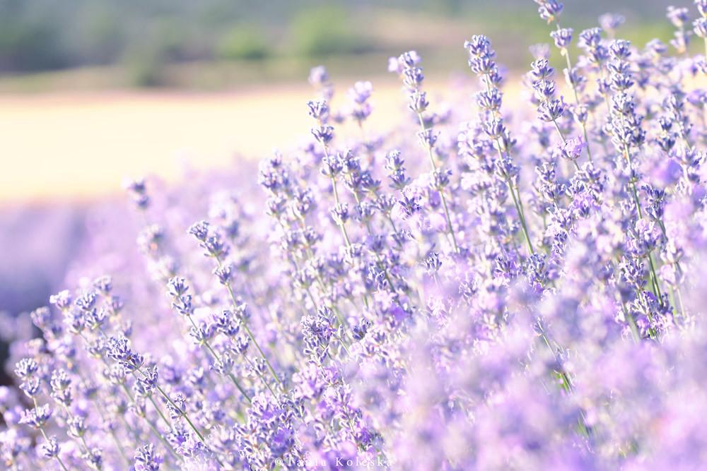 Chanel love day 19: lavender grey gold hardware reissue