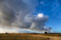 Hoge Veluwe (TIF Fotografie) Tags: park winter nature landscape arnhem nederland hdr veluwe landschap hogeveluwe nationaalpark natuurenlandschap ingridfotografie