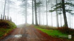 De vuelta de Aitzorrotz en Eskoriatza (Xoán Carballo) Tags: canon arboles camino bosque 7d vasco niebla pais charco eskoriatza