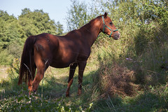 Jump (ALTABENA PHOTOGRAPHY) Tags: horse caballo cheval belgique ardennes briquemont