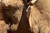 Texture elefante, zoo di Fasano, Puglia, Italia. (william eos) Tags: desktop art canon photo italia wallpapers fotografia puglia animali elefante sfondo photografy fasano photocard nicepictures bellefoto canonef24105mmf4lisusm canoneos450d zoodifasano sfondiperdesktop williameos williamprandi
