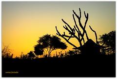 Quarta-sunset (sonia furtado) Tags: brazil sol brasil contraluz ne rn pds silhuetas quartasunset