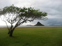 Chinaman's Hat (Jake T) Tags: family friends hawaii 2012 chinamanshat kualoabeach august2012 hawaiiaugust2012