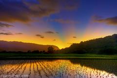 Hanalei Nirvana (philipleemiller) Tags: nature reflections landscape hawaii sunsets kauai hdr hanalei crepuscularrays pacificislands tarofields godsrays ndgrads d7000 magicunicornverybest galleryoffantasticshots trueexcellence1