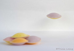 Flying saucer...... (Tricia Laing) Tags: stilllife colours liftoff sweets sherbet takeoff tabletop ricepaper flyingsaucers pastelcolours tastedoneandtheyrenotasniceastheylook