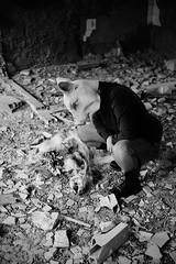 weird dreams. (smoking_blue) Tags: abandoned death pig ruins mask bones silvie smokingblue