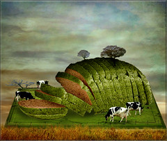 The bread comes from the field (jaci XIII) Tags: field bread surrealism campo oxen po bois surrealismo