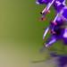 """Dans le jardin des 5 sens - Yvoire - Haute Savoie • <a style=""""font-size:0.8em;"""" href=""""http://www.flickr.com/photos/53131727@N04/7965552576/"""" target=""""_blank"""">View on Flickr</a>"""