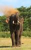 Warning (Sara-D) Tags: nature animals forest warning asia wildlife sl lanka elephants srilanka ceylon lk aliya maximus tusk wildanimals southasia atha elephasmaximus tusker sarad dustbath serendib elephas elephasmaximusmaximus saranga elephantcharge wildelephants dealwis sarangadeva