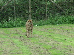 """Longleat Safari Park • <a style=""""font-size:0.8em;"""" href=""""http://www.flickr.com/photos/81195048@N05/8017603401/"""" target=""""_blank"""">View on Flickr</a>"""