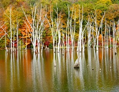 White Dead Trees (Stanley Zimny (Thank You for 16 Million views)) Tags: autumn trees white color reflection tree fall dead seasons