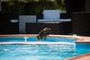 (anto291) Tags: camargue lessaintesmariesdelamer hotelclamador piscina gatto