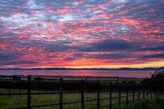 sunset_field_walking_3970-5 (allybeag) Tags: sunset fields solway cumbria crosby