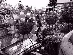 P6080787adftt (photos-by-sherm) Tags: good quilts retail garden flowers sculpture yard accessories amana iowa summer decorations metal