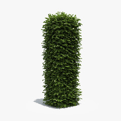 Boxwood Column (oleg_scolt) Tags: plant modern column shrub garden topiary park bush nature foliage leaf boxwood buxus visualization exterior 3d green set collection greenary