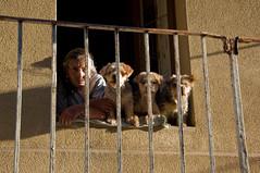 Finestra a Enna / Window in Enna / Prozor u Enni (Vjekoslav1) Tags: enna sicilia trinacria italia sicily italy prozor finestra window europe europa psi dogs pas dog cane streetphotography