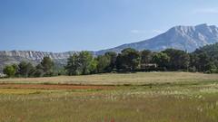 Au pays de Cézanne (Titole) Tags: montagnesaintevictoire landscape titole nicolefaton trees fields poppies grass