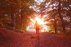 On track (Nathalie_Dsire) Tags: running sports evening sunset sunlight september wood path tree nature sun light leaf step forest track
