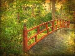 Japanese zen series (Nick Kenrick.) Tags: horticulturalcentreofthepacific hcp zen japanesegarden japanese miksang garden green bridge magicunicornverybest