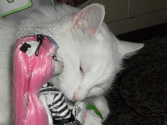 Rochelle Goyle and the gargoyle cat ~ SAM3011_MonsterHigh_Rochelle_ (applecandy spica) Tags: pink white black cat grey furry kitten chat doll soft gray kitty fluffy gargoyle katze fleurdelis fatcat chubby weiss gatto bianco blanc kittie ktzchen micio rochelle chaton gattino weis soffice peloso morbido gattone micetto micione gattochiatto monsterhigh rochellegoyle