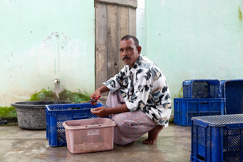 Shrimp farmer in Aceh. Photo by Mike Lusmore/Duckrabbit, 2012.