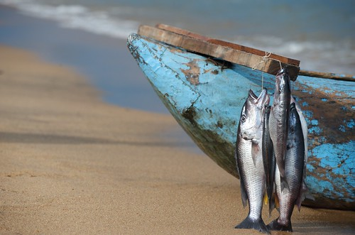 Catch being sold, Lake Malawi, Malawi . Photo by Patrick Dugan, 2009.