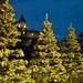 Christmas Tree Lighting 6