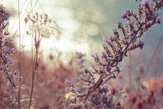 lite nullibicity (Phixo) Tags: flowers light sea summer plants nature water colors sunshine warm mood shine bokeh