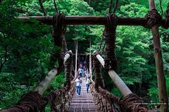 Kazurabashi Bridge, Iya Valley (Christian Kaden) Tags: architecture architektur beofjap bestofjapan bridge brücke grün iya japan kazurabashi natur nature schlucht shikoku tal green valley いやけい いやたに かずら橋 みどり 四国 建築 建築術 日本 日本一番 橋 渓谷 祖谷渓 自然 谷