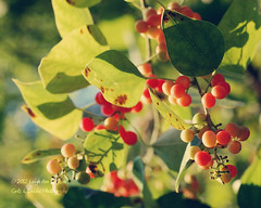 One day at a time (Bhamgal) Tags: red summer green soft berries alabama 365 yip