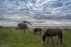 Horse power (Mohammed.Pix (Fine Capture Photography)) Tags: horse clouds skies farm australia melbourne mohammedpix