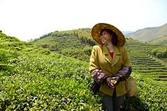 Delicate Hands of Zhejiang - My Fair Lady (RachelGouk) Tags: china mountain leaves rural tea worker farmer greenhills moganshan zhejiang tealeaves teapicking nakedretreats rachelgouk