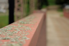 Fence with Benefits (mazzmn) Tags: bridge red green fence moss rust dof rail line lichen vp hff