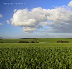 Spring Day - Durbanville (Craig Pitchers) Tags: africa sky panorama green clouds southafrica nikon farm farming capetown fields polarizer durbanville wheatfields 2470mm polarisedfilter portraitpanorama nikon2470mmf28 nikond7000 durbanvillefarms