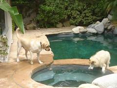 7915364742 af7895306a m Hercules, Photos of my fun Yellow Labrador