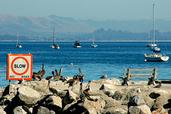 No Wake (John 3000) Tags: ocean california ca blue signs pelicans water animals azul bench boats bay harbor agua rocks barcos pacific aves pajaros animales resting avilabeach portsanluis