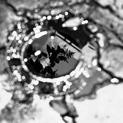 cry me a circle (Vasilis Amir) Tags: blackandwhite abstract blur reflection leave water monochrome square puddle mud bokeh reflexions  vasilisamir