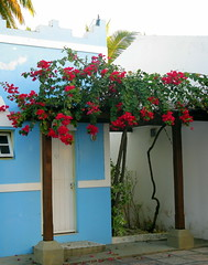 Door with flowers. Sauipe, Brazil (Rubem Jr) Tags: travel flowers windows brazil house building art southamerica arquitetura brasil architecture arquitectura balcony paisagem americadosul